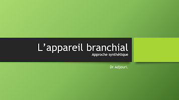 L_appareil branchial.pptx