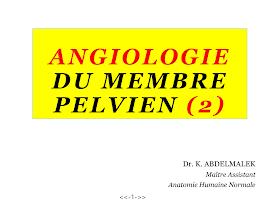 Analogie du membre Pelvin.pdf