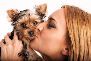 Webáruház készítés kutyakozmetika részére