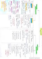 Thyroïde resumé.pdf