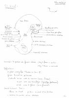 L'Os loxal.pdf