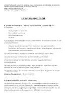 Spermatogenèse.pdf