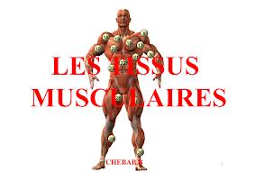 Diapo Tissu Musculaire.pdf