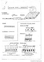 planches_histo 1 pdf.pdf