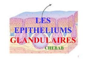 Diapo (glandes exocrines) (2017-2018).pdf