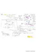 QQ notions sur le foie resumé.pdf