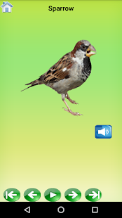 Birds Sound for Baby Learning- screenshot thumbnail