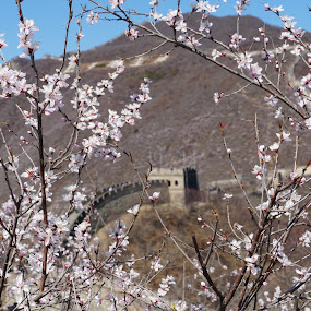 China Wall in spring by Mylene Rizzo - Landscapes Travel ( spring, cherry blossoms, china, cherry blossom, china wall )