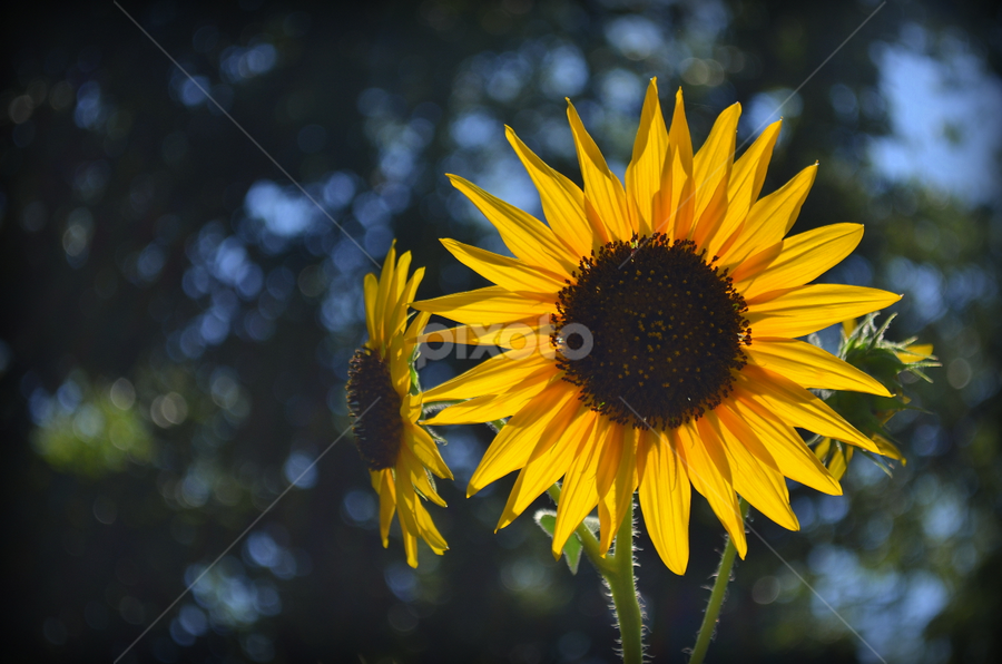 Yellow Flower by Pablo Moguel - Novices Only Flowers & Plants ( wild, nature, background, yellow, flower )