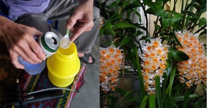 Dùng bia tưới lan: Chưa tới 1 tháng, cây tươi tốt nở hoa rực rỡ cho chị em tha hồ chơi Tết