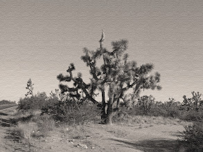 Photo: Joshua Tree Forest Parkway of Arizona, Hwy 93 - Sepia Version - This image is a version taken from the original which was as close to true color as I could get, since I was starting with a JPG image. See the monochrome version for better detail of high desert and rugged landscape and the color version for comparison.