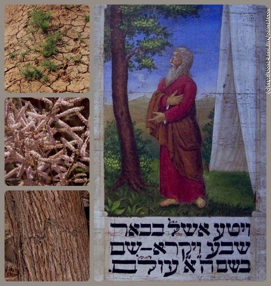 Eshel-collage-a