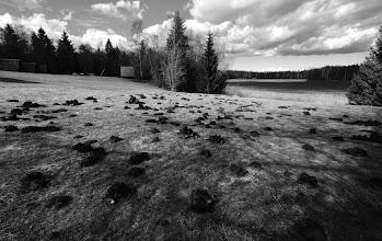 Photo: Mole Kingdom.  #blackandwhitephotography  #blackandwhite