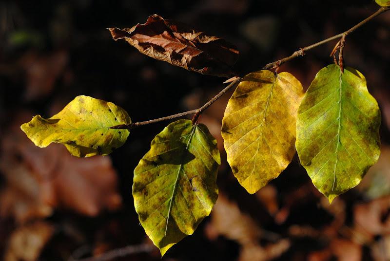 Quintetto d'autunno di -Os-