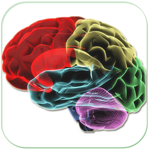 Human Brain Parts & Functions