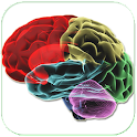 Human Brain Parts & Functions
