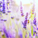 Holistic Aromatherapist icon