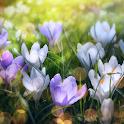 Spring Landscapes Wallpaper icon