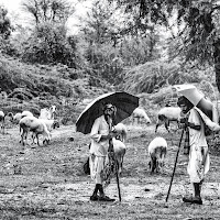 Shepherds in the rain di