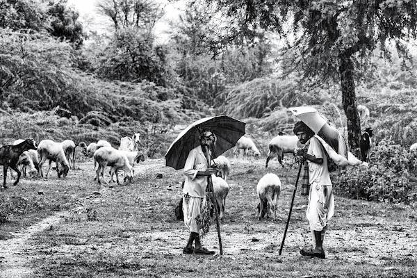Shepherds in the rain di Marco Tagliarino