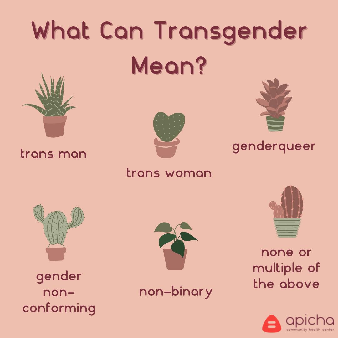 categories of transgender identity