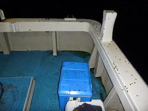 Photo: ・・・移動してもダメでした。 更に飛んできました! 何千という「カメムシ」に船を占領されました! く、臭い!!