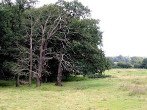 Photo: bare trees  for #treetuesday (+Tree Tuesday) curated by +Shannon S. Myersand +Christina Lawrie #fotoamateur (+Fotoamateur) by +Markus Landsmann+Karsten Meyer+Scotti van Palmand +Remo Primatesta