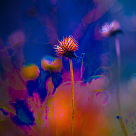 Winter flower transformed by Janice Poole - Digital Art Things ( abstract, colorful, blue, bloom, pink, yellow, flower )