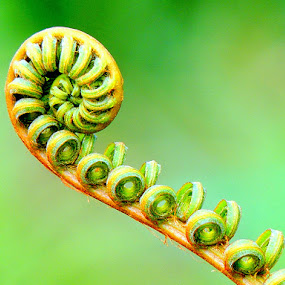 Fern by Yusop Sulaiman - Nature Up Close Other plants (  )