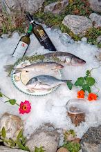 Photo: Viele frische Fische