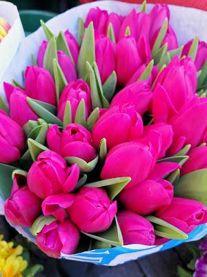 Tulipani: una gioia per gli occhi di masaria24