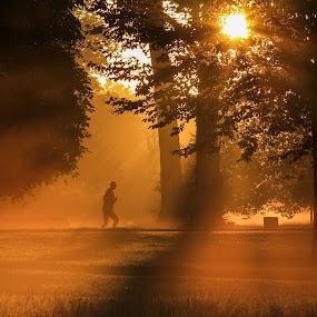 Hyde Park jogger by Howard Ferrier - City,  Street & Park  City Parks ( kensington gardens, jogging, park, tree, contre jour, silhouette, solitude, sunrise, gold, running, sun, mist,  )