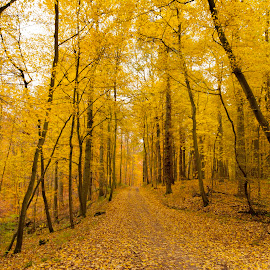 Long Path Ahead by Keith Reling - Landscapes Forests ( fall forest )