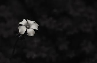 Photo: flowers in the dark