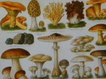 Mushroom....tips & Info. Recipe