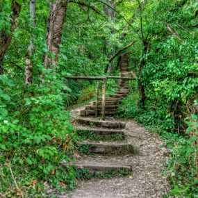Stairway to ... by Dominic Jacob - Landscapes Forests ( stairs, stairway, foret, green, escalier, vert, forest,  )