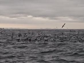 Photo: 船のすぐそこで騒いでます!