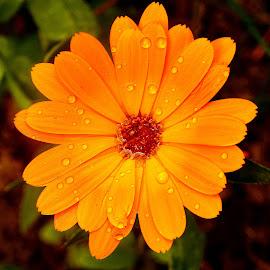 Quel souci !!! by Gérard CHATENET - Flowers Single Flower