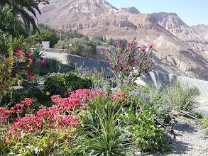 Photo: The kibbutz has its own botanical garden.