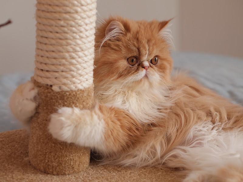 La giuventù felina di kevin_heric