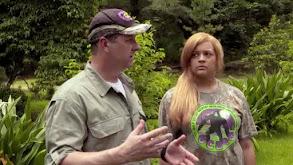Knock, Knock, It's Bigfoot thumbnail