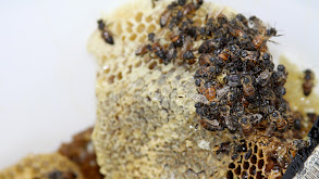 Live Bees, Live Ammo thumbnail