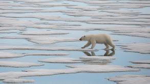 Polar thumbnail