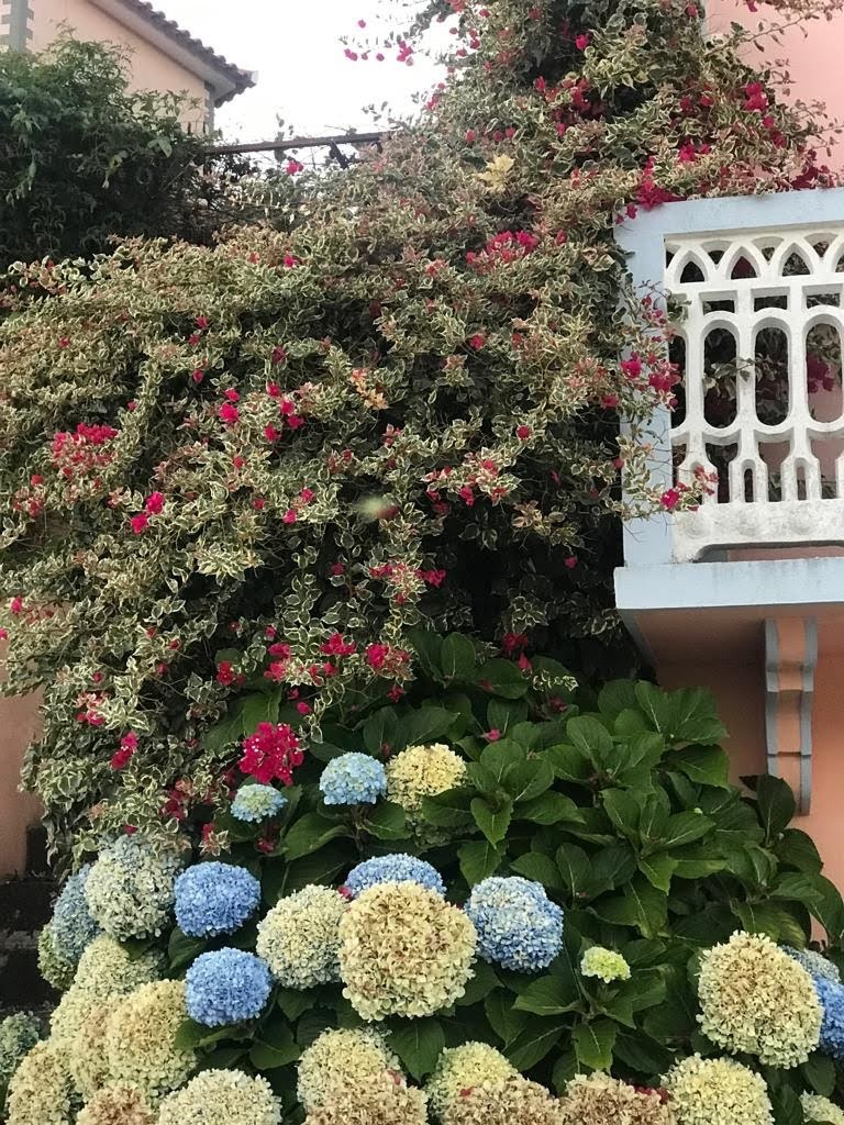 de hortensia en de bontbladige bougainville