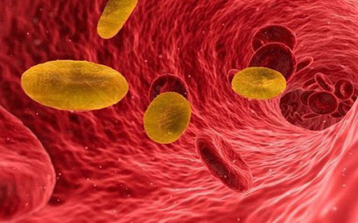 Tại sao nhóm máu O Rh - lại hiếm