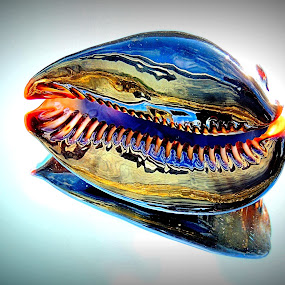 Cowry Grin by Becky Luschei - Artistic Objects Still Life ( goofy grin, tipped, chocolate cowry, grin, toothy opening )