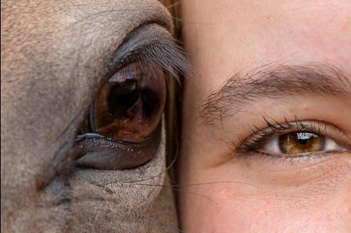 Pferd Mensch Auge