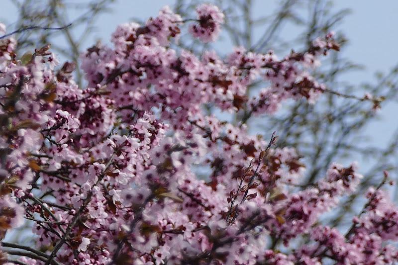Spring air di viola94