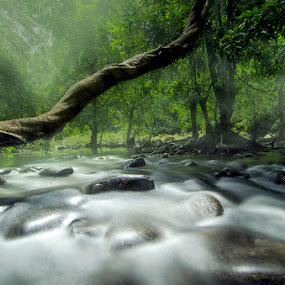 Waterflow by Amril Nuryan - Landscapes Forests ( tree, fog, green, long exposure, forest, slow speed, river )