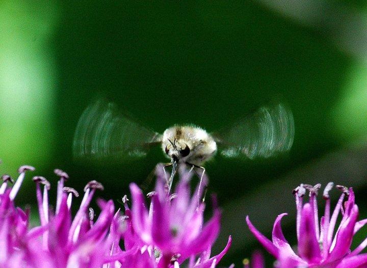 sulle ali della primavera di astraea